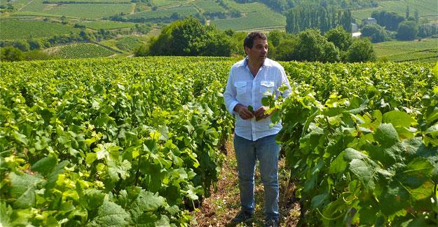Bernard Zito, vins de bourgogne