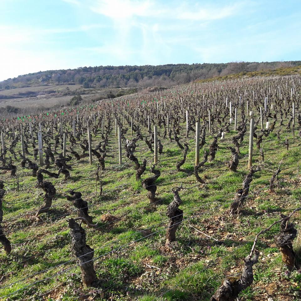 Parcelle Santenay 1 cru Clos des Mouches